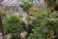 pflanzen blumen kakteen f r garten balkon gew chshaus contra winterblumen. Black Bedroom Furniture Sets. Home Design Ideas